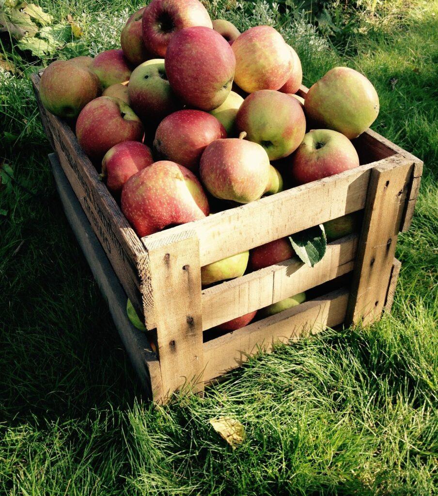 Apfelernte @ Lichtensee-Niederviehbach